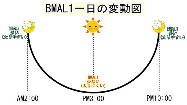 BMAL1の一日の変動図