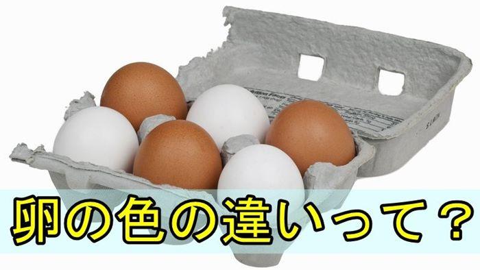 茶色い卵と白い色の卵の3つの違いとは?色が違う意外な理由